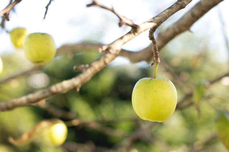 'Picking the Low Hanging Fruit' and Other Stupid Stuff We Say in the Corporate World – with Author James Sudakow